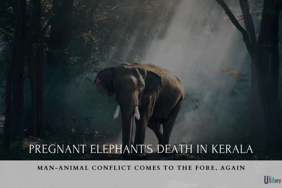 pregnant-elephants-death-in-kerala-man-animal-conflict-comes-to-the-fore-again